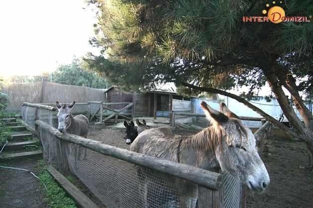 Gehege mit Eseln