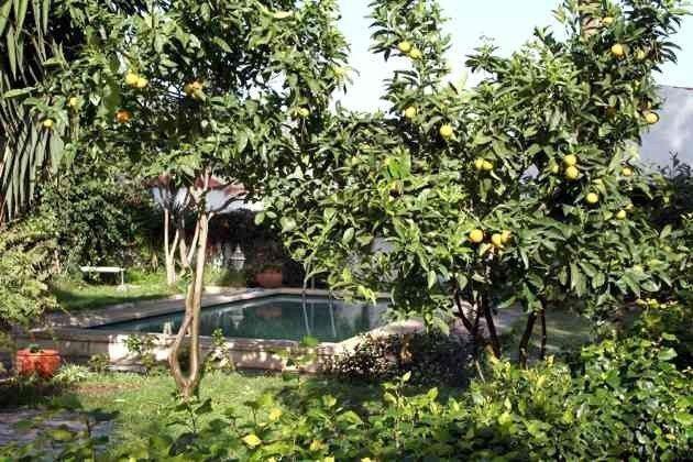 Pool und Garten mit Obstbäumen