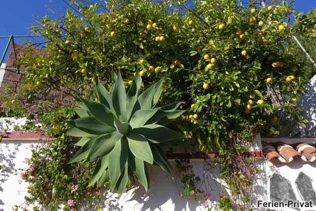 Pflanzen der Terrasse