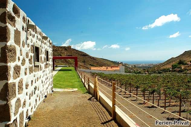 Außenbereich mit Weinanbau und Meerblick