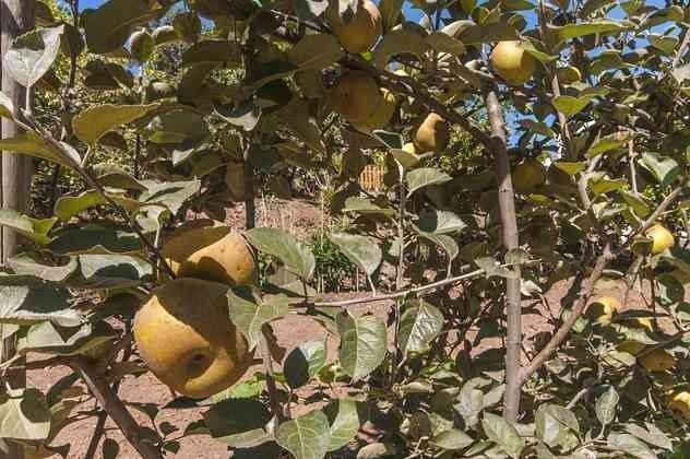 Obstbäume auf dem Anwesen GC 2584-18