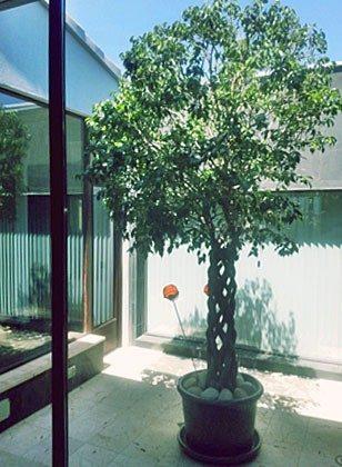 Innenhof-Bepflanzung Portochristo Novo Ferienhaus Ref. 45563-13