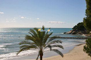 Bild 3 - Mallorca Ferienwohnung 2309 in Paguera - Objekt 43591-12