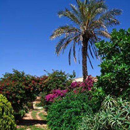 Mallorca Llucmajor Ferienwohnungen auf traumhafter Finca mit eigenen Pferden Ref. 62049 Bild 12