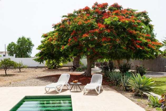 TF 177919-3 Garten mit Pool