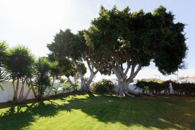 Garten zum Sonnenbaden oder Entspannen unter Bäumen