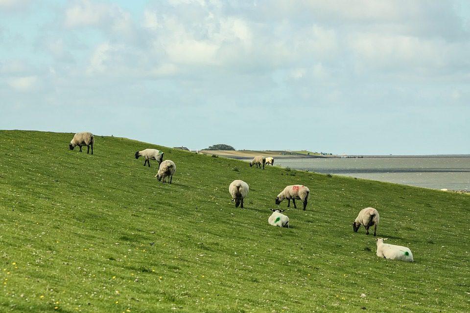 Ferienhaus Nordseeküste (Holstein)